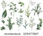 Stock photo big set watercolor elements herbs leaf collection garden and wild herb leaves branches 529477807