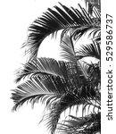 Beautiful Palms Leaf On White...