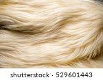 Texture  Background. Fur White...