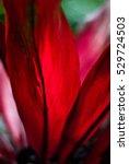 red petals   tropical exotic... | Shutterstock . vector #529724503