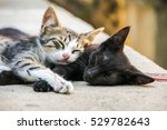 Stock photo two adorable little cats sleeping little kitty little cats small cats small kittens adorable 529782643