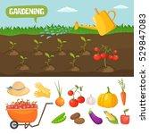 garden colorful designs... | Shutterstock .eps vector #529847083