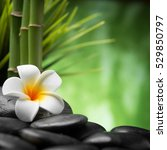 frangipani and bamboo on the... | Shutterstock . vector #529850797