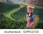Kid And Green Tea Field In Shu...