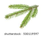 fir tree branch isolated on a... | Shutterstock . vector #530119597