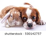 dog and rabbit together. animal ... | Shutterstock . vector #530142757