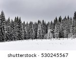Winter Mountain Forest. Fir...