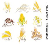 cereals icon set with rye rice... | Shutterstock . vector #530251987