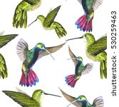 sky bird colibri in a wildlife... | Shutterstock . vector #530259463
