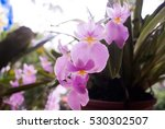 orchid   tropical exotic... | Shutterstock . vector #530302507