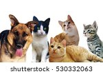 pets animals group collage for... | Shutterstock . vector #530332063