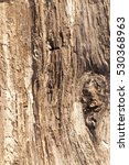 Small photo of old split with an ax tree with irregular structure. Firewood, photographed close-up. Small depth of field. on wood visible traces of decomposition and destruction of insects