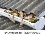 Rain Gutter Cleaning From...