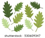 Oak Tree Leaves In Green