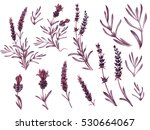 french lavender watercolor set. ... | Shutterstock . vector #530664067