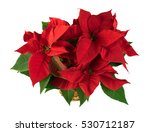 Red Poinsettia Christmas Plant...