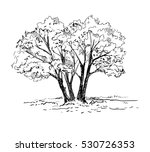 hand drawn trees. vector...