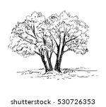hand drawn trees. vector...