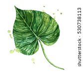 watercolor tropical leaf. | Shutterstock . vector #530738113