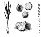 hand drawn set of onion. retro... | Shutterstock .eps vector #531034537