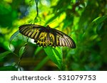 Butterfly Beautiful In The...