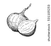onion hand drawn vector... | Shutterstock .eps vector #531105253