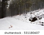 Winter Forest Landscape With...