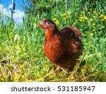 Organic Outdoors Egg Laying...