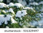 Fir Branch In Snow   Christmas...