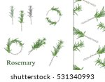 hand drawn rosemary sprigs ...