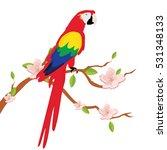 vector illustration colorful... | Shutterstock .eps vector #531348133