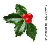 holly berry leaves isolated | Shutterstock . vector #531399943