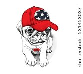 Stock vector pug puppy in a red cap with a charm bone vector illustration 531453037