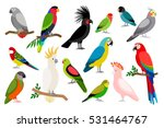 Tropical Parrot Set With...