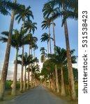 palm tree road sunset in rio de ... | Shutterstock . vector #531538423