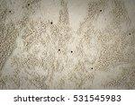 Sandy Soil Texture