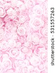 Stock photo blurred of sweet roses in pastel color style on soft blur bokeh texture for background 531557263