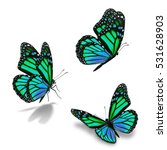 beautiful three green monarch... | Shutterstock . vector #531628903
