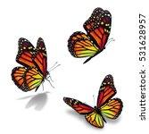 beautiful three monarch...   Shutterstock . vector #531628957