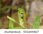 a close up shoot of an insect | Shutterstock . vector #531644467