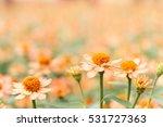 orange flowers in the garden... | Shutterstock . vector #531727363
