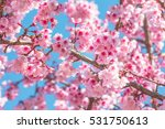 pink blossoms on the branch... | Shutterstock . vector #531750613