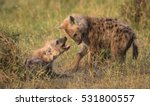 a horizontal photograph of two... | Shutterstock . vector #531800557