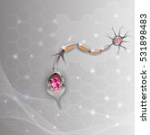 neuron  nerve cell that is the... | Shutterstock .eps vector #531898483