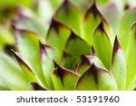 Flower Cactus Agave