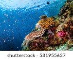 Underwater Life  Underwater...