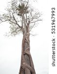 Small photo of Tree entwine other tree