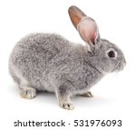 Stock photo grey rabbit isolated on a white background 531976093