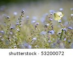 A Large White Butterfly In A...