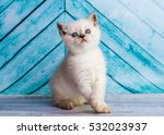 kitten scottish straight | Shutterstock . vector #532023937